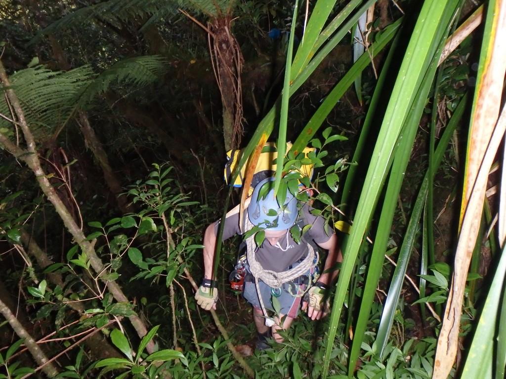 retour dans la jungle